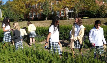 maharishi school, edible schoolyard